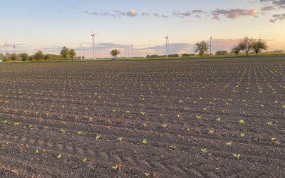 FarmDroid beim in-row weeding